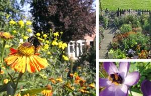 Building a Bee Garden