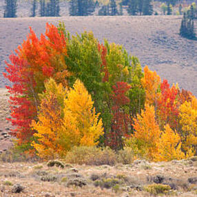 Fall Colors in Nature Colorado