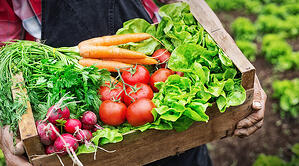 Food Access in Sustainable Communities