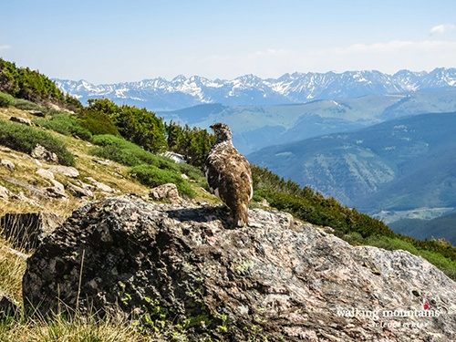Hiking-Notch-Mountain-Holy-Cross-Wilderness-Web