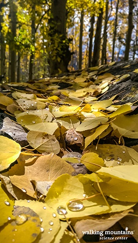 Hiking-Whitney-Lake-Colorado-Fall-Colors_Web