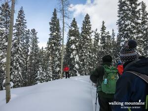 Snowshoe Trail Tennessee Pass Colorado Trail
