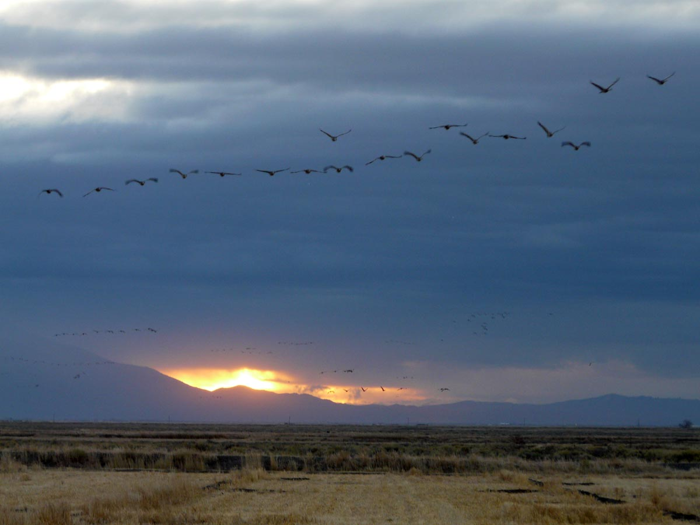 SandHill Cranes San Louis Valley Sand Dunes Sunset thecranes2