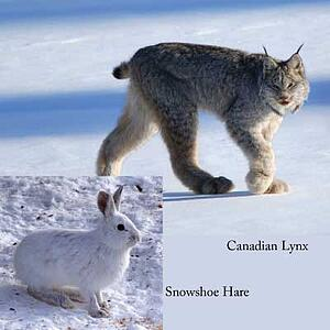 Snowshoe-CN-Artivle-Photo