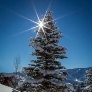 Snowy-Tree-300x300