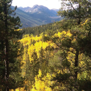 Sus-tip-fall-colors