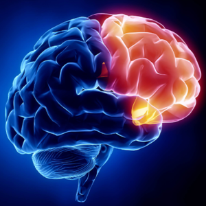 The Science Behind Neurology