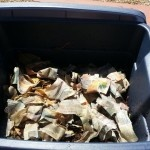 The Science Behind Worm Composting 4