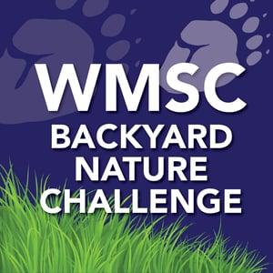 WMSC-BAckyard-NAture-Challenge