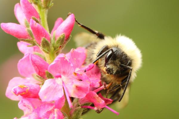 bee-on-flower-600x400