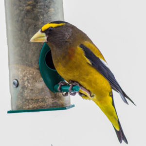 bird national kindness